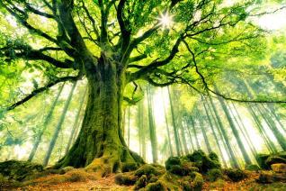 arbol místico