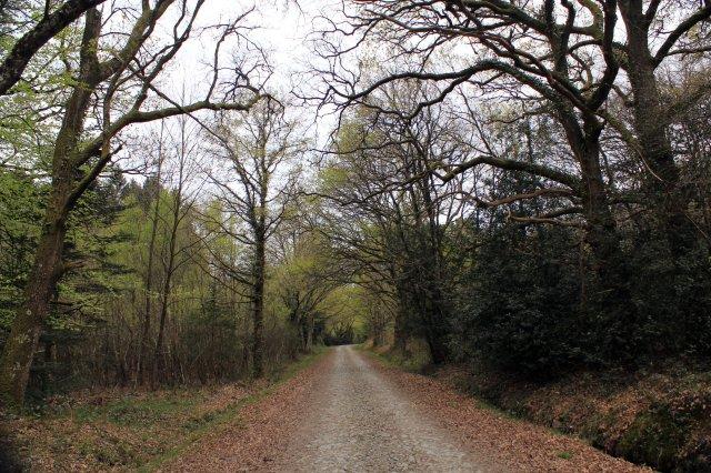 Camino Bosque Vivir O Rutina