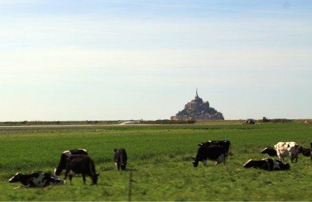 Saint Michel con vacas