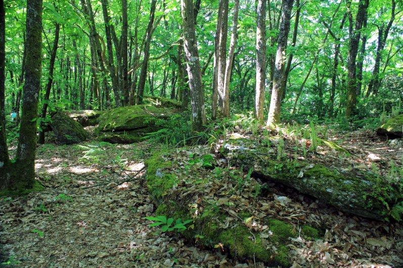 dolmenes caidos bosque
