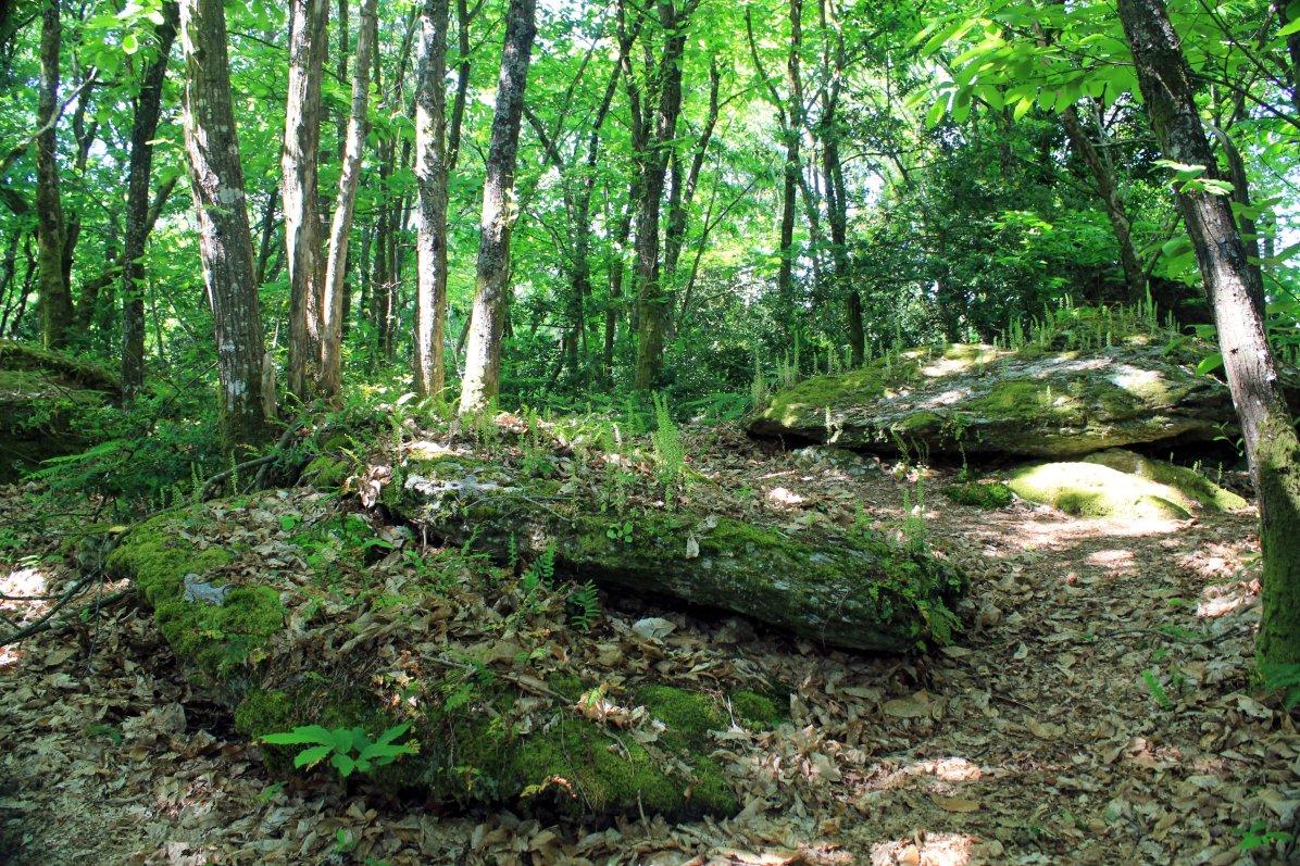 enterramientos neolíticos bosque