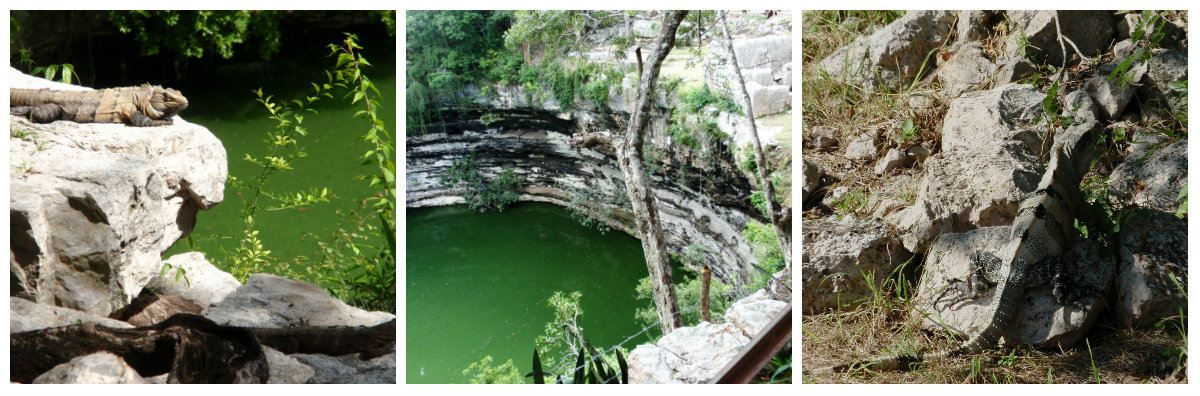 collage-cenote